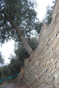Terrassenmauern, teilweise noch die aus dem 16. Jahrhundert
