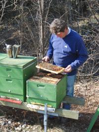 Honig aus den Alpen