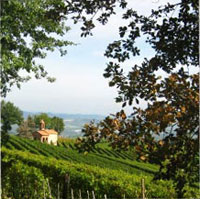 Weinberge im Piemont