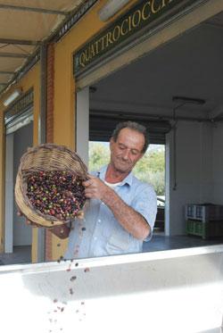 Olivastro Olivenöl