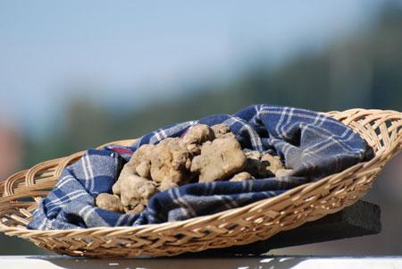 Trüffeln aus San Miniato