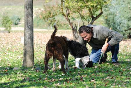 Riccardo bei der Trüffelsuche mit seinen Hunden