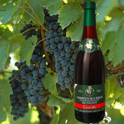 Lambrusco – Wein aus Italien