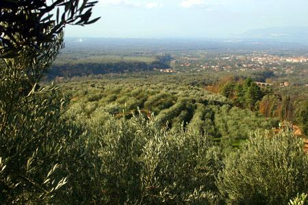 Die Landschaft um die Olearia San Giorgio