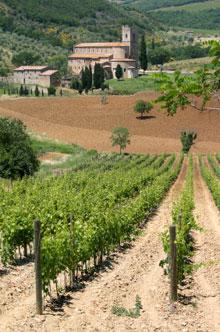Die Abtei Sant'Antimo mit Weinstöcken