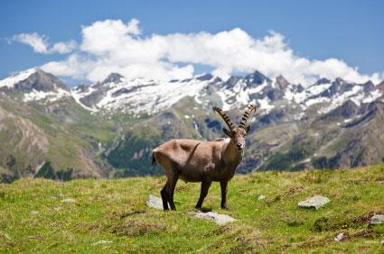 So wildromantisch ist Aosta.