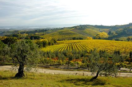 Landschaft in Chianti