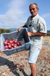 Vincenzo zeigt die Ernte