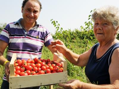 Pasquale und Maria bei der Ernte