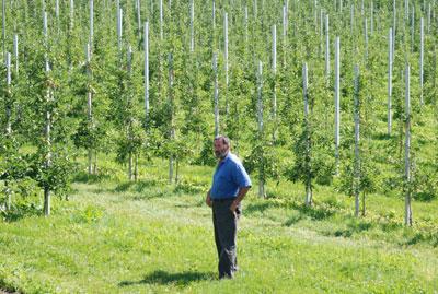 Karl Luggin inmitten seiner Obstbäume