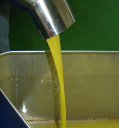 Frisches Olivenöl rinnt aus der Mühle