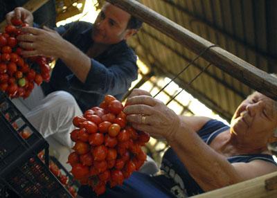 Piennolo - Verarbeitung in Handarbeit