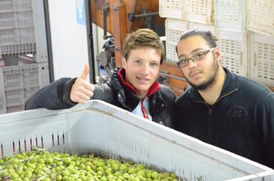 Wie viel kostet es, einen Liter Olivenöl herzustellen?