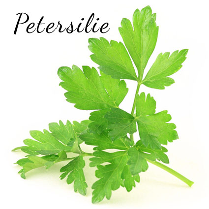glatte petersilie