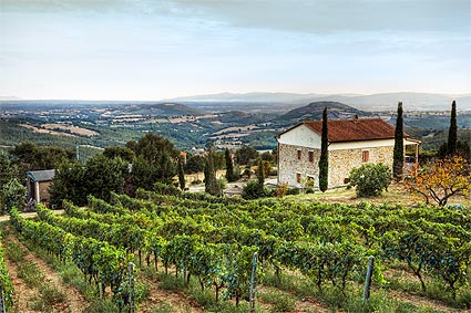 Weinberge im Val d'Orcia