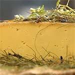 Hoamatkas affinierter Almkäse in Heu Kuhmilch Südtiroler Käse-Spezialität
