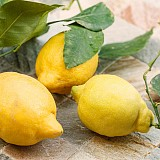 Amalfi-Zitrone - 1 Stück - aromatisch mild
